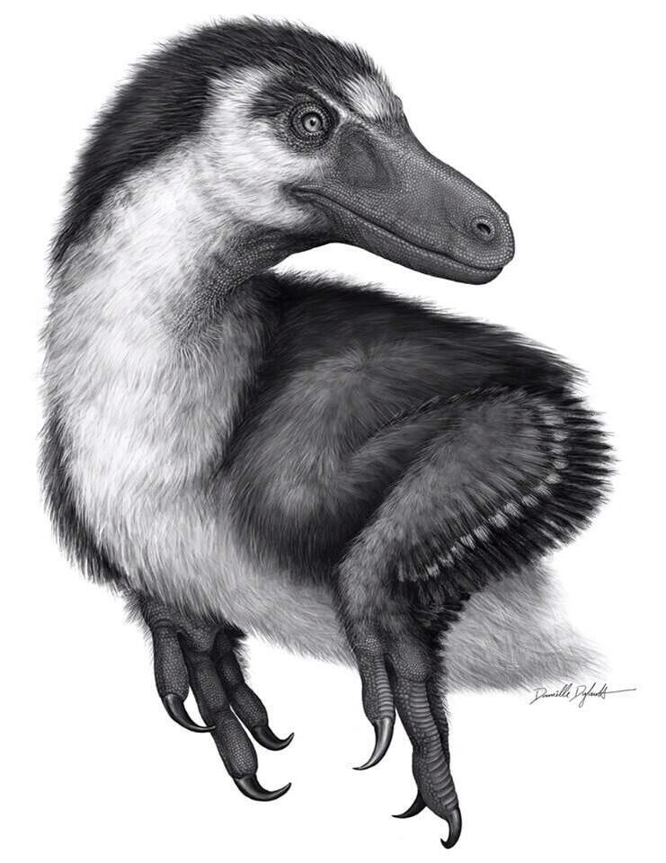 Illustration of Acheroraptor temertyorum. Copyright Danielle Dufault.