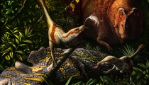 Two Acheroraptor feeding. Copyright Julius Csotonyi.