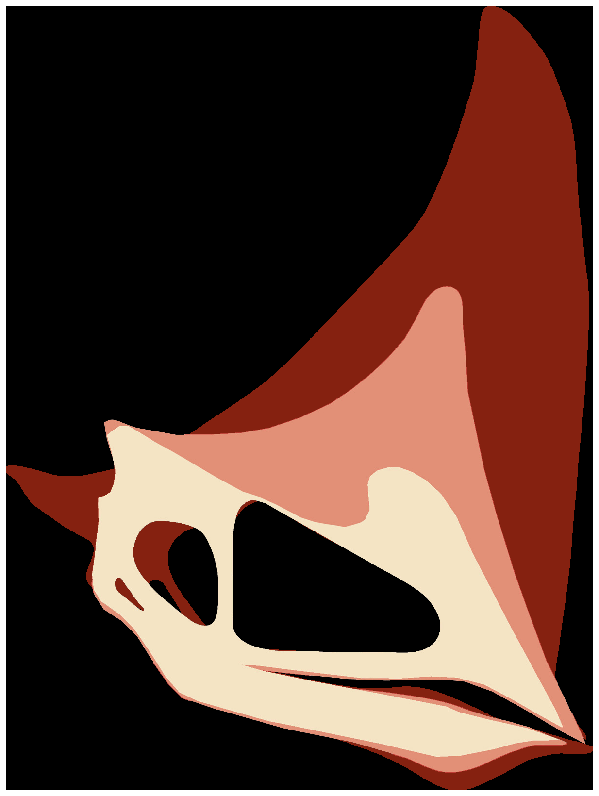 Comparison of adult head crest (dark) and juvenile (light). Image Source: Manzig PC, Kellner AWA, Weinschütz LC, Fragoso CE, Vega CS, et al. (2014) Discovery of a Rare Pterosaur Bone Bed in a Cretaceous Desert with Insights on Ontogeny and Behavior of Flying Reptiles. PLoS ONE 9(8): e100005. doi:10.1371/journal.pone.0100005