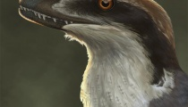 Reconstruction of Acheroraptor. Copyright Emily Willoughby.