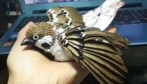 Cardboard BirdBy Kai-Xiang Xhong
