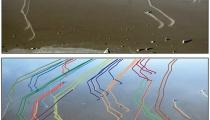 Rock trails on the Racetrack Playa. Source: Figure 2, Sliding Rocks on Racetrack Playa, Death Valley National Park: First Observation of Rocks in Motion. doi:10.1371/journal.pone.0105948.g002