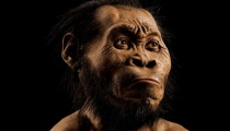 New Species Homo Naledi