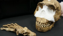 Homo Naledi Bones